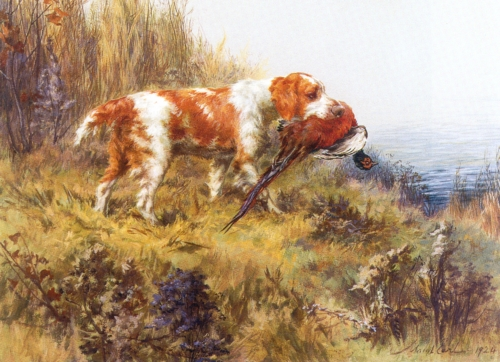 A Maud Earl Painting of a Welsh Springer Spaniel retreiving a pheasant