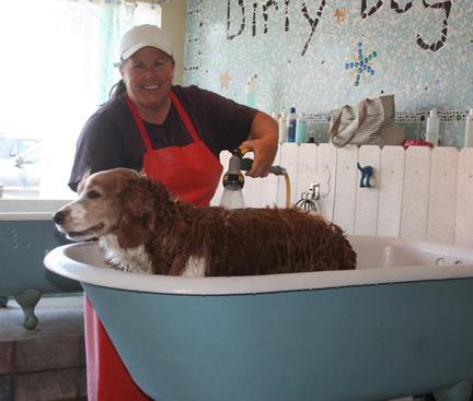 Winslow getting a bath at Dirty Dog Wash in Huntington Beach California