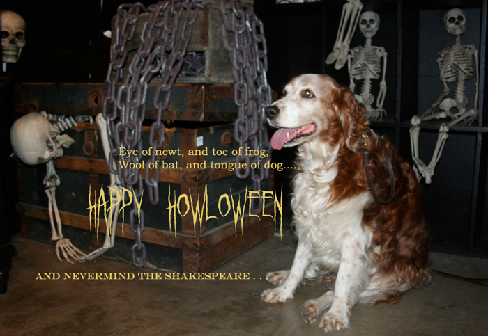 Winslow Hatfield posing for his Halloween 2012 photo