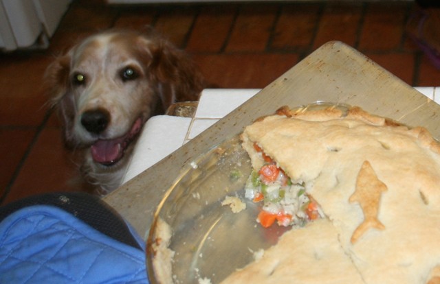 Winslow Hatfield looking at his Chicken Pot Pie
