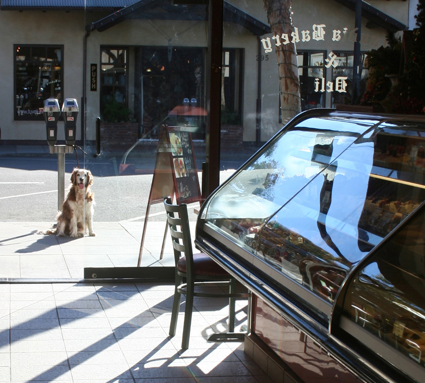 Winslow waiting for at Scandia Bakery in Laguna  bearclaw after a hike above Laguna Beach at top of the world