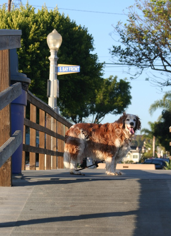 Winslow telling Mom to hurry up we have to explore Balboa Island